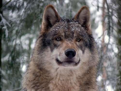 Топ-25: Самые сильные укусы в мире животных
