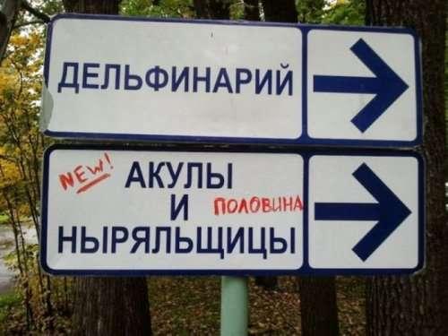 Смешные объявления и надписи (24 фото)