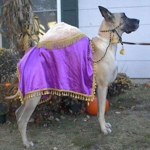 Костюмы на Хэллоуин для собак (28 фото)