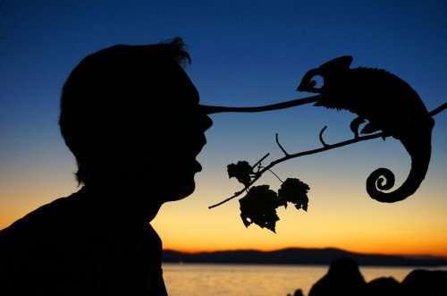 Причудливые силуэты на фоне заката (16 фото)