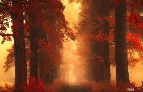 Осенний лес в фотографиях Янека Седлара (20 фото)
