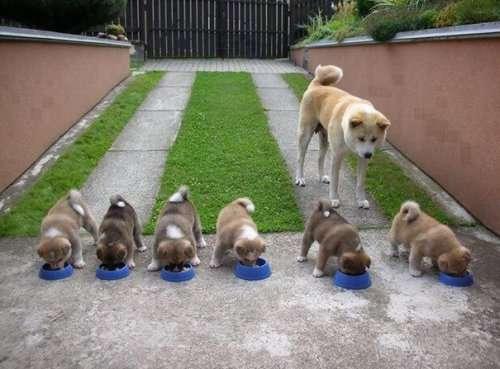 Гордые мамочки очаровательных щенят (27 фото)