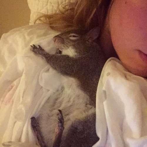 Очаровательная белочка Джилл, спасённая во время урагана (19 фото)