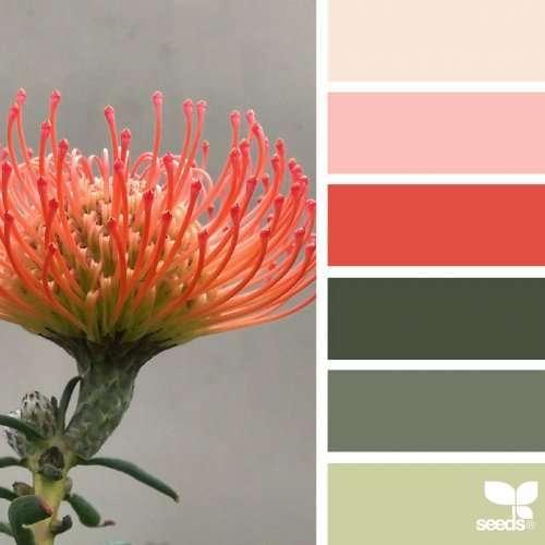 Палитры цветов от самой природы (20 фото)