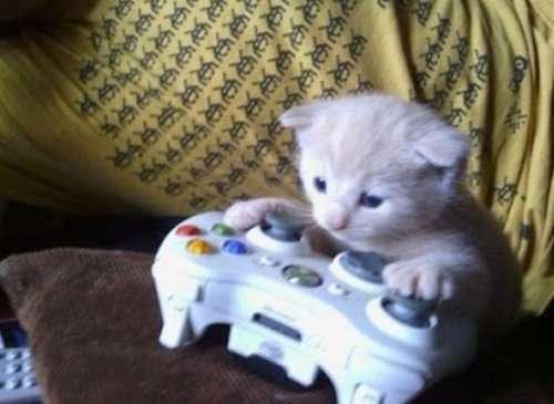 Кошки-игроманы (10 фото)