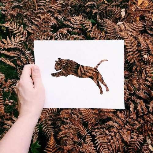 Силуэты животных на фоне природы (15 фото)