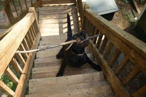 Забавные собаки, попавшие в ловушку (15 фото)