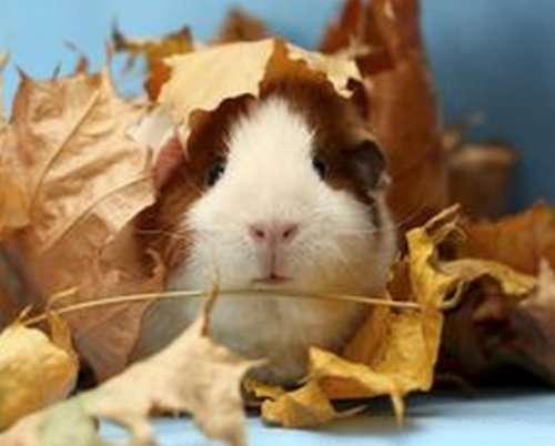 Животные в осенних листьях (10 фото)