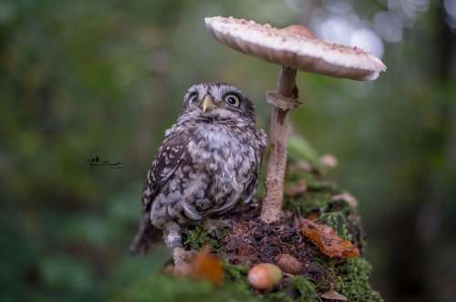 Очаровательная сова Польди в фотографиях Тани Брандт (10 фото)