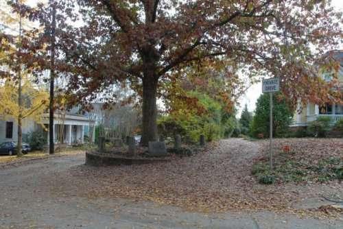 Сам себе хозяин: Уникальный белый дуб в штате Джорджия (5 фото)