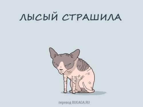 Разновидности котов: а какой кот у тебя? (12 шт)