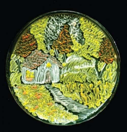 Картины в чашках Петри (12 фото)
