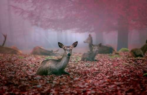 Животные и осень (22 фото)