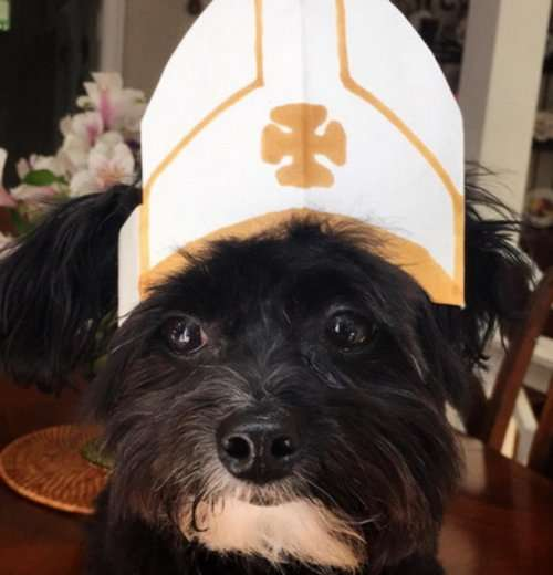Собаки в костюмах папы римского (10 фото)