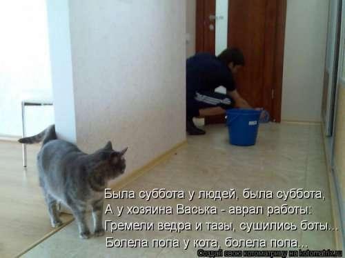 Новая котоматрица (32 фото)
