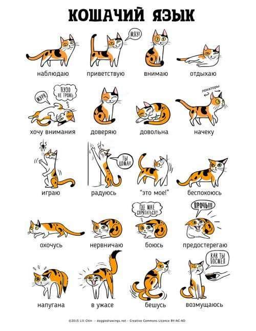Иллюстрации Лили Чин, которые помогут понять кошек и собак (2 шт)