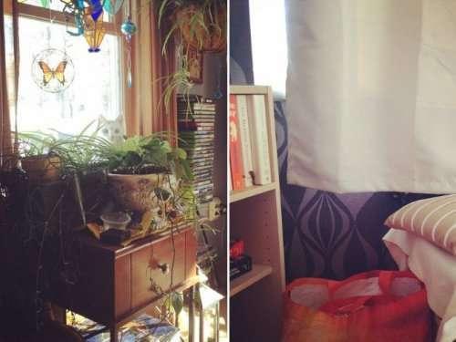 Кошки — настоящие мастера маскировки (17 фото)