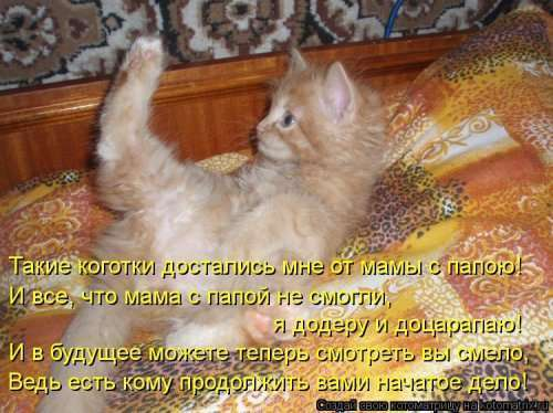 Свежая котоматрица на Бугаге (38 фото)