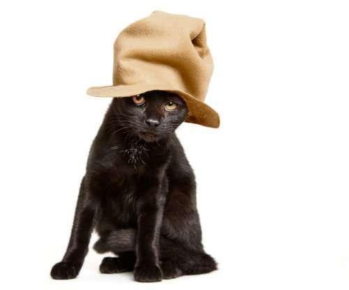 Очаровательная фотосессия для бездомных кошек (8 фото)
