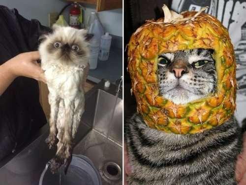 Недовольные кошки (16 фото)