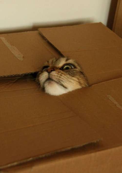 Забавные кошки, попавшие в ловушку (26 фото)