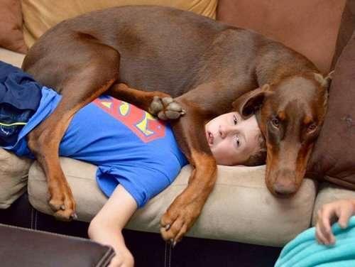 Собаки, которым плевать на ваше личное пространство (36 фото)