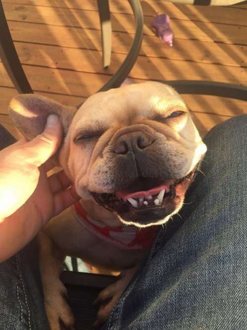 Очаровательные собаки, которые поднимут вам настроение (19 фото)