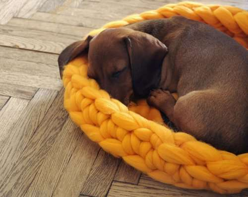 Лежаки для домашних питомцев, созданные гигантской вязкой (8 фото)