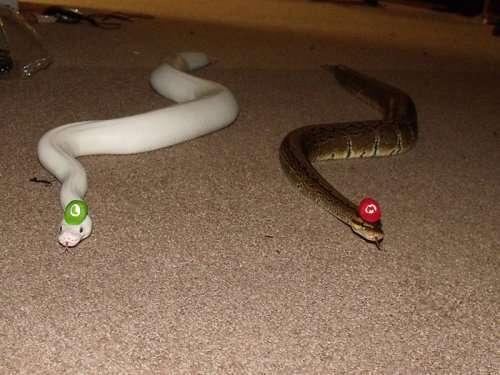 Змеи в шляпах (25 фото)