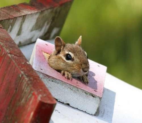 Животные, которых никак не ожидаешь увидеть в скворечнике (10 фото)