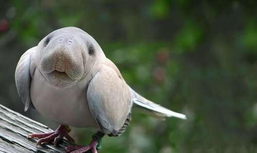 Животные-гибриды, которых, к счастью, не существует (35 фото)