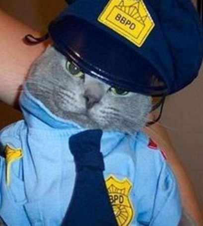 Кошки-полицейские (10 фото)