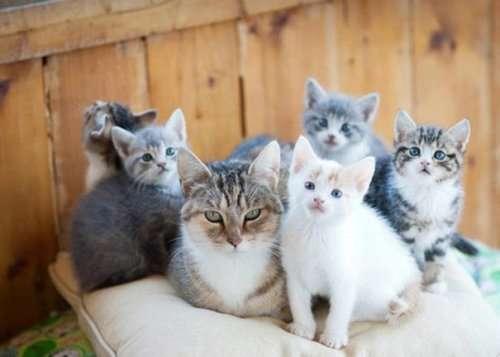 Гордые мамочки очаровательных котят. Часть 1 (25 фото)