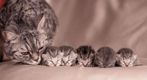 Гордые мамочки очаровательных котят. Часть 2 (23 фото)