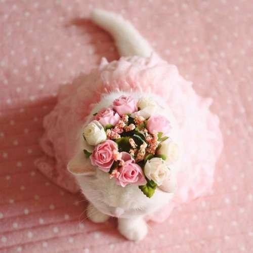 Ура — самая популярная кошка в Японии (9 фото)