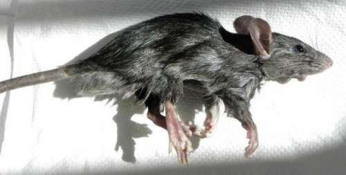 Топ-25: Самые инвазивные существа на Земле