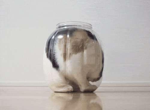 Кошки, обладающие свойствами жидкости (18 фото)