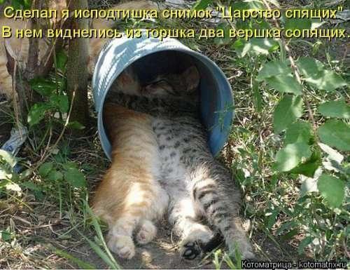 Свежая котоматрица на Бугаге (31 фото)