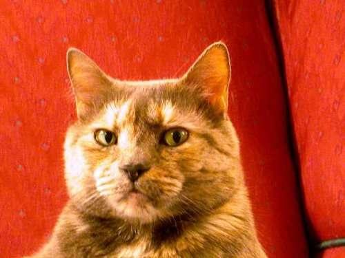 Подозрительные коты, которые всех выведут на чистую воду (14 фото)