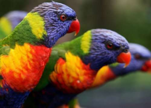 Топ-10: Потрясающие животные с радужной окраской