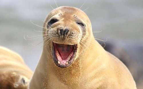 Замечательные животные, которые поднимут вам настроение (13 фото)