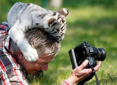Фотографы дикой природы во время своей работы (33 фото)