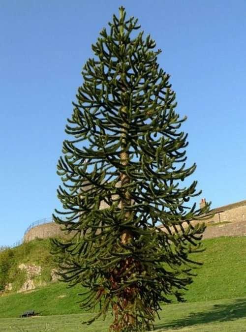 Необычные деревья (10 фото)