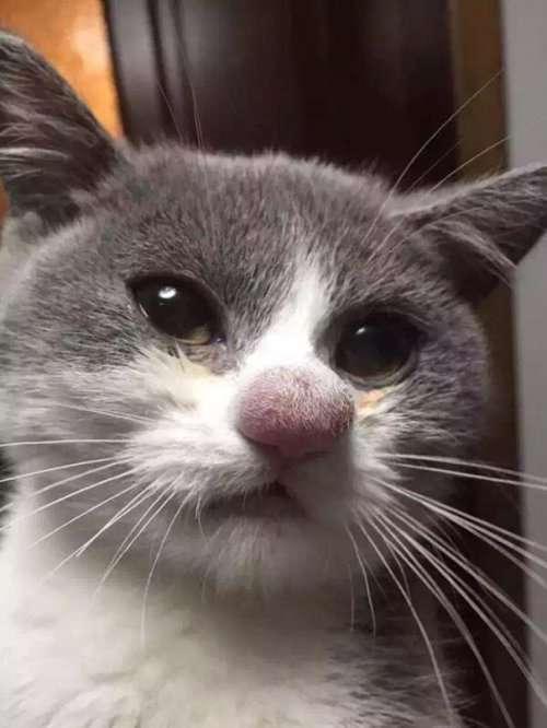Смешные кошки после укуса пчёл (26 фото)