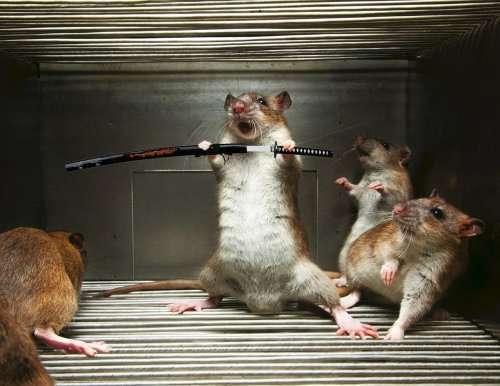 Животные с оружием (15 фото)