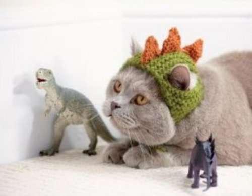 Кошки в костюмах динозавров (10 фото)