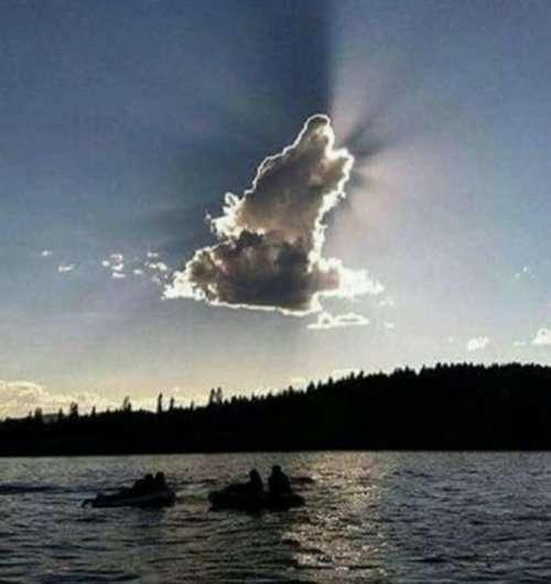 Облака в виде животных (10 фото)