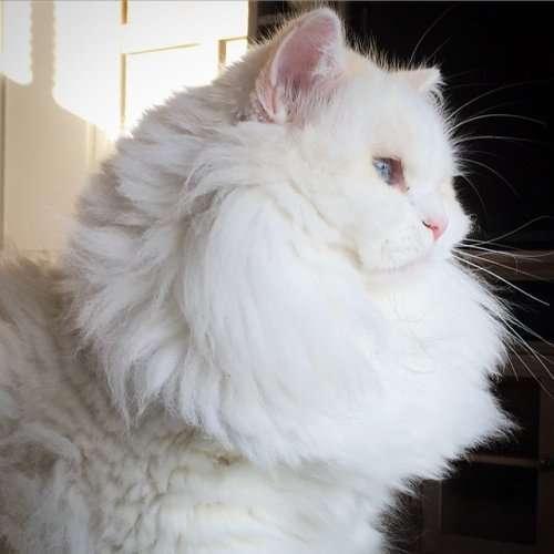 Неожиданное перевоплощение спасённого котёнка (12 фото)