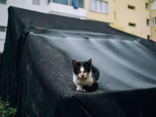 Городские кошки в фотографиях Хажду Тамаса (26 фото)