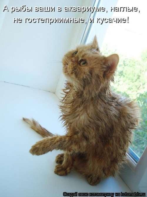 Новая котоматрица на Бугаге (39 фото)